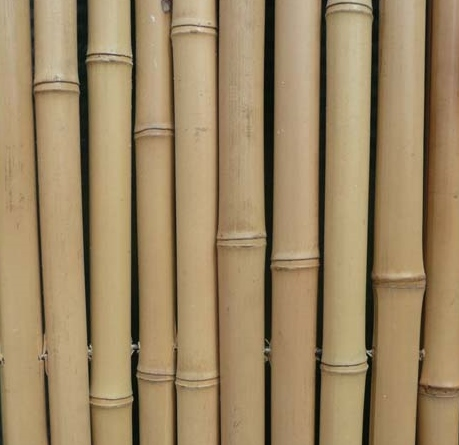Bamboe Palen Gamma.Bamboestokken Gamma Geimpregneerd Hout Beitsen